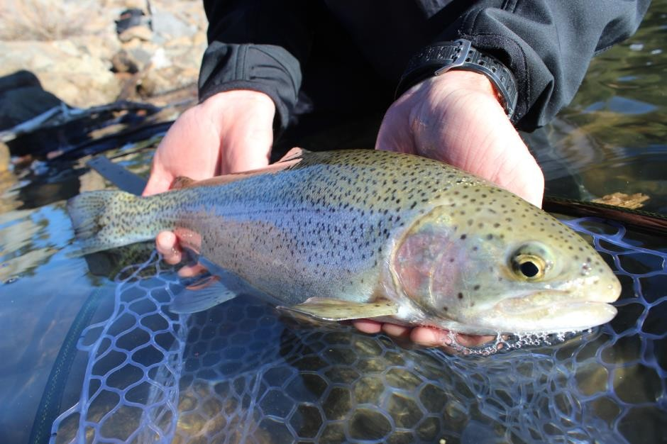http://mattheronflyfishing.com/wp-content/uploads/2013/03/Truckee-River-Lake-Tahoe-Fly-Fishing-Private-Water-14.jpg