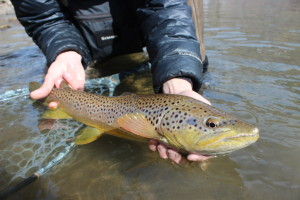 A beautiful winter brown on the Truckee.